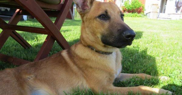Ζευγάρι Σουηδών υιοθέτησε τον σκύλο που βασάνιζε ανελέητα η «ιδιοκτήτριά» του στο μπαλκόνι του σπιτιού της