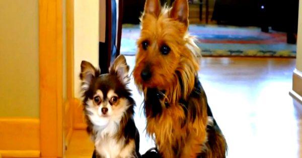 Δύο σκυλάκια νιώθουν ενοχές… Γιατί;