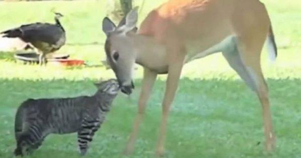 23 απρόσμενες φιλίες στο ζωικό βασίλειο (video)