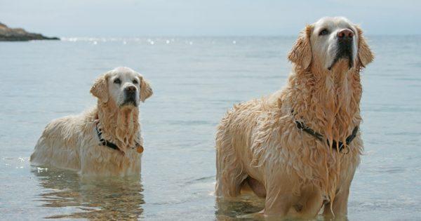 Σκυλιά στη θάλασσα και νόμοι; Μαγική εικόνα