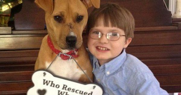 Ποιος έσωσε ποιόν; Η συγκλονιστική ιστορία ενός πίτμπουλ και ενός αγοριού