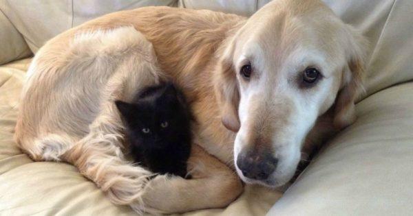 Σκύλος έχασε τη γάτα του από καρκίνο, οπότε του βρήκαν έναν καινούριο καλύτερο φίλο