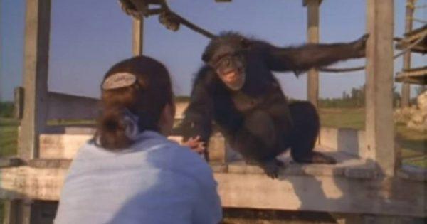Χιμπατζής χαμογελά και αγκαλιάζει τη γυναίκα που τον έσωσε πριν 25 χρόνια [φωτό, βίντεο]