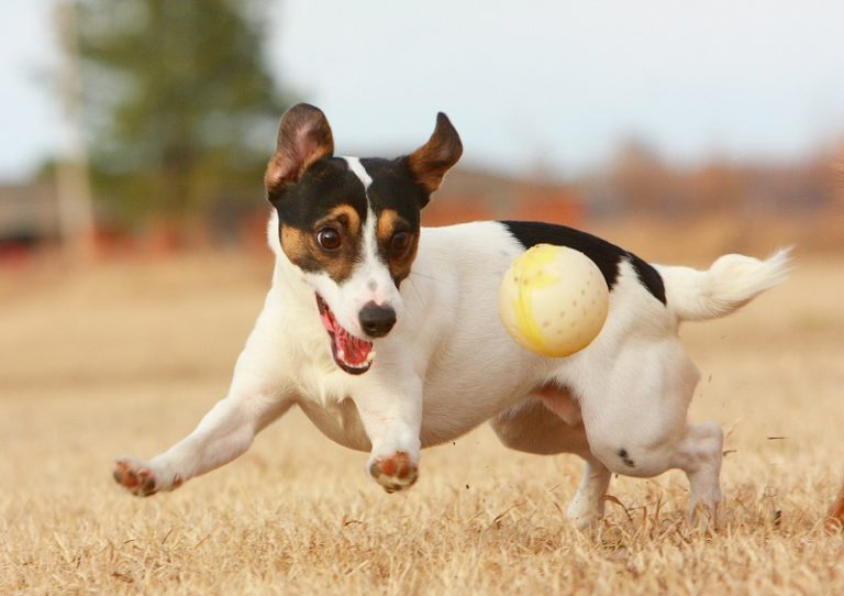 JRT_with_Ball-768x542
