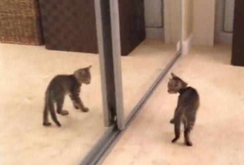 Καθρέφτης γατάκι