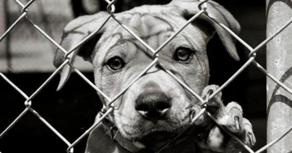 Τα ζώα είναι συνήθως το πρώτο θύμα ενός βίαιου ατόμου