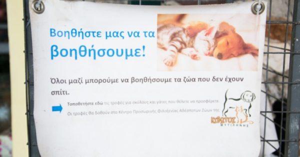 Τροφοσυλλέκτης για τα αδέσποτα της Λέσβου στο σούπερ μάρκετ «Βερόπουλος»