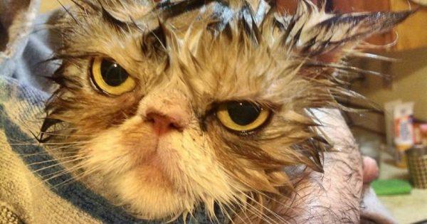 Ο χειρότερος εχθρός της γάτας είναι το … νερό (βίντεο)