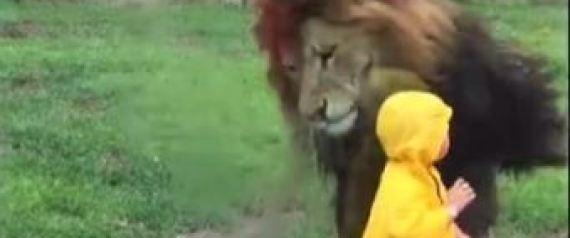 Λιοντάρι επιτίθεται σε μικρό αγοράκι που έκανε το λάθος να γυρίσει την πλάτη του