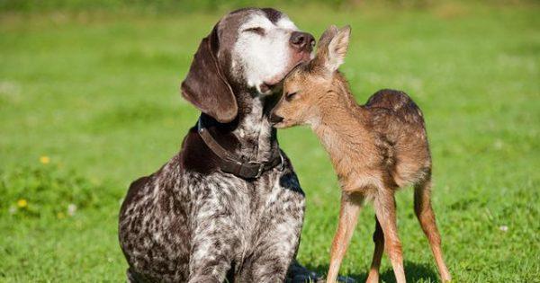 Mελέτες αποδεικνύουν ότι τα ζώα έχουν ηθικό κώδικα