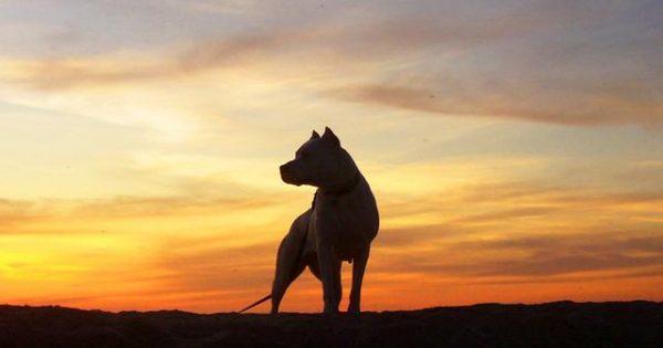 Πώς ένα Dogo Argentino ρίσκαρε τη ζωή του για να σώσει τα κοριτσάκια της οικογένειας (βίντεο)