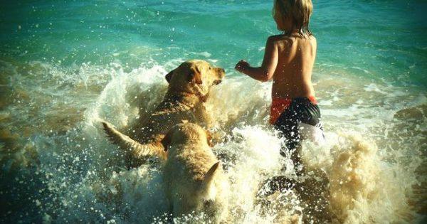 Επιτέλους! Σε ποιες παραλίες μπορείτε να κολυμπήσετε με τον σκύλο σας και με τη βούλα του νόμου