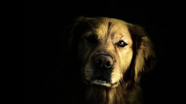 Μπορούν τα σκυλιά μας να δουν στο σκοτάδι; Φοβούνται όπως εμείς; (video)