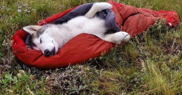 Δείτε τον πιο τυχερό σκύλο του κόσμου! Ο κηδεμόνας του δεν τον αποχωρίζεται ποτέ [φώτος, video]