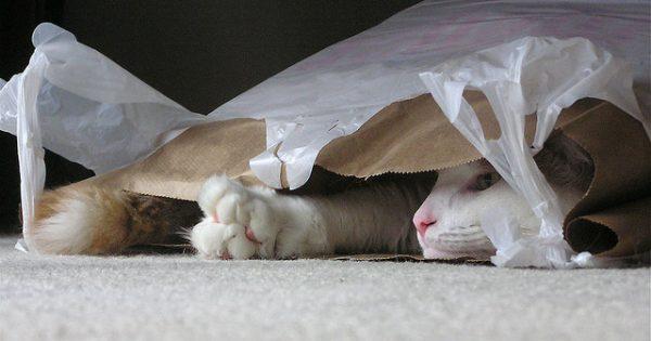 Γιατί οι γάτες λατρεύουν να γλείφουν πλαστικές σακούλες;