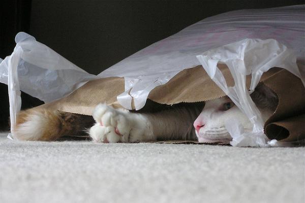 πλαστικές σακούλες γάτες