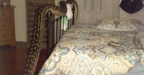 Ξύπνησε και βρήκε έναν πύθωνα να κάνει βόλτες στην κρεβατοκάμαρά της
