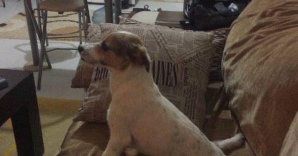 Τρελό γέλιο: Ένας σκύλος βλέπει ταινία τρόμου (βίντεο)