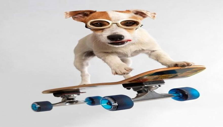 Σκύλος skateboarding