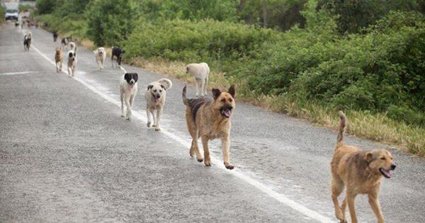 Πώς η Ολλανδία κατάφερε να μην έχει αδέσποτα σκυλιά;