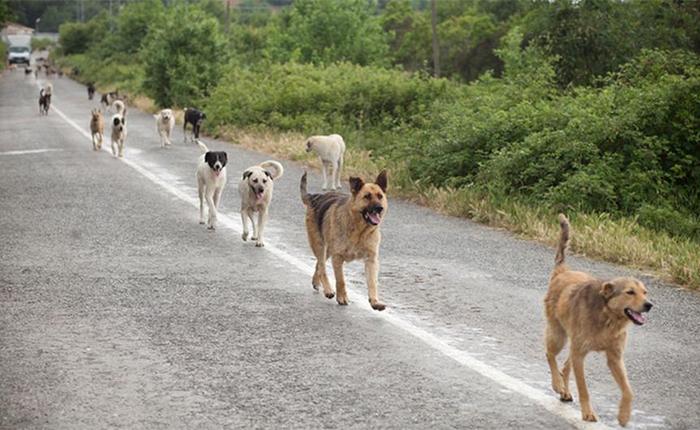 Ολλανδία αδέσποτα σκυλιά