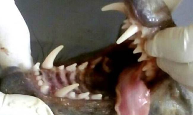 Αιχμαλώτισαν τον απόλυτο τρόμο: Δείτε το μυθικό τέρας που ρουφούσε το αίμα τους για μήνες!