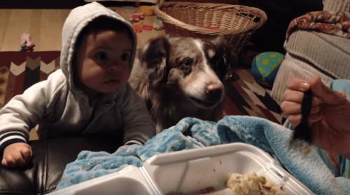 Όταν ο σκύλος λέει «μαμά» και αφήνει πίσω του τον μπέμπη της οικογένειας