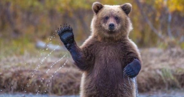 9 πράγματα που δεν ήξερες για τα ζώα
