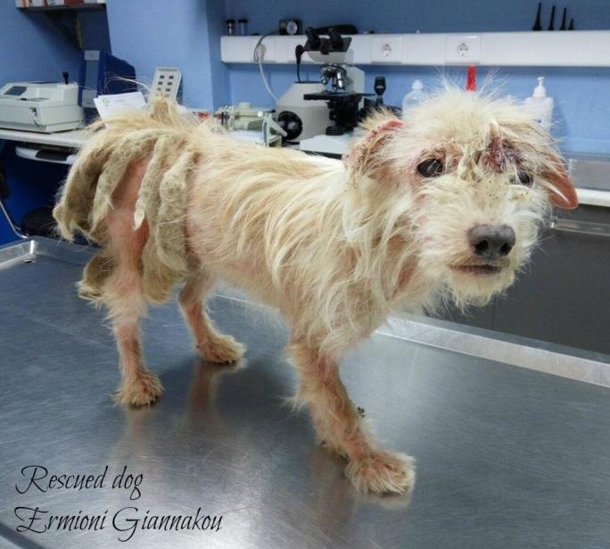 κακοποίηση σκύλων Αδέσποτα