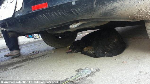 κακοποίηση σκύλων αίγυπτος