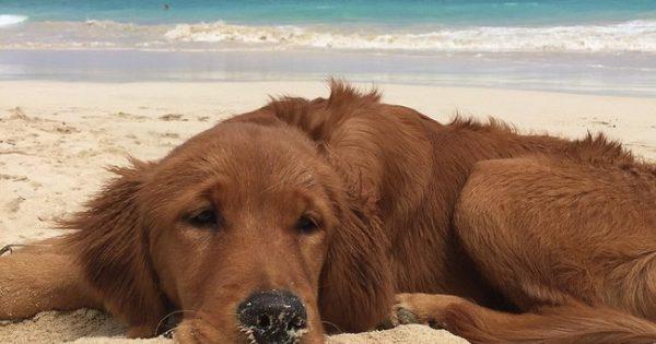 Όταν έμαθαν ότι ο σκύλος τους θα πεθάνει ξεκίνησαν μαζί του μια υπέροχη περιπέτεια!