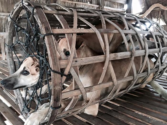 Φεστιβάλ Yulin κακοποίηση ζώων