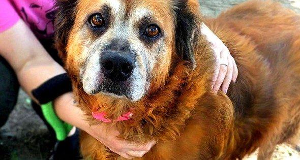 Αφοσιωμένη σκυλίτσα που έμεινε δίπλα στον νεκρό ιδιοκτήτη της, βρίσκει νέα οικογένεια!