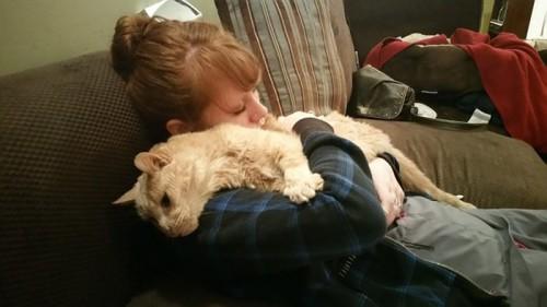 υιοθεσία αδέσποτων Γάτα