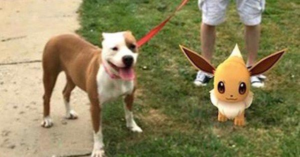 Καταφύγιο αδέσποτων χρησιμοποιεί το Pokemon Go για να μαζέψει εθελοντές και δουλεύει άψογα!!