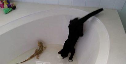 Η γάτα το μετάνιωσε