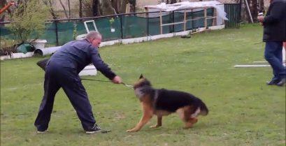 Εκπαιδευτής κακοποιεί σκύλο