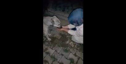 Γλυκό βίντεο: Σκύλος ευχαριστεί μια γυναίκα που του προσφέρει νερό
