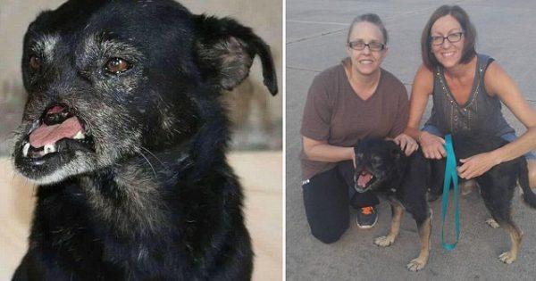 Βασάνισαν σκυλάκι στην Αίγυπτο, κόβωντάς του τη μύτη… Μέχρι που εμφανίστηκε αυτή η γυναίκα στη ζωή του!