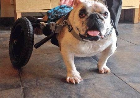Σκύλος με ειδικές ανάγκες πολεμά τον καρκίνο