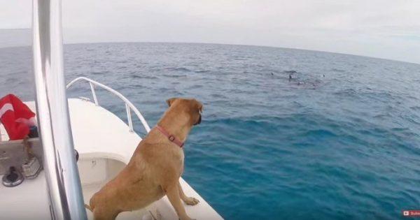 Δείτε τι κάνει αυτός ο σκύλος, μόλις βλέπει δελφίνια για πρώτη φορά!