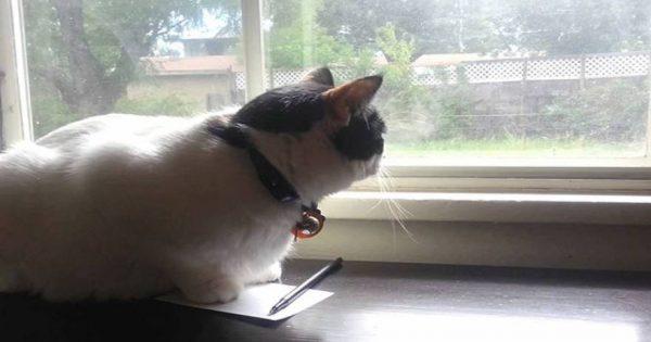 Είναι η πιο καλή γάτα ληστής που υπάρχει- Δείτε τι έκανε (video)