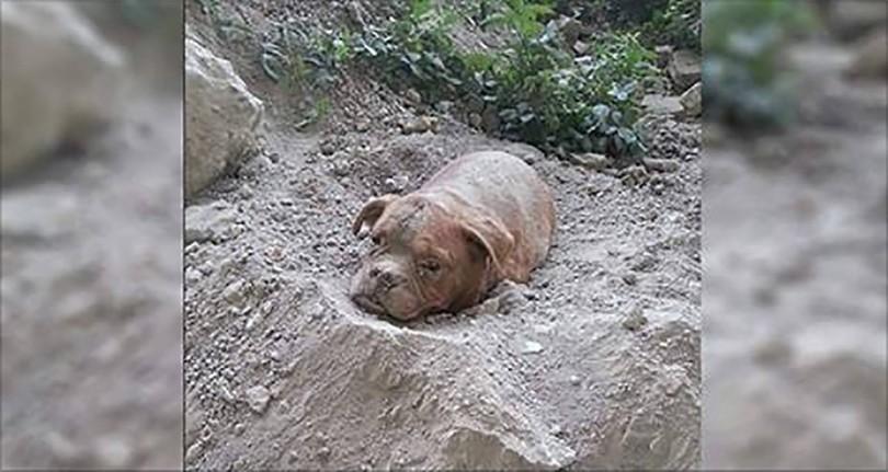Συγκλονιστικό! Είχε βγάλει βόλτα τον σκύλο του, όταν ανακάλυψε άλλον έναν θαμμένο ζωντανό!