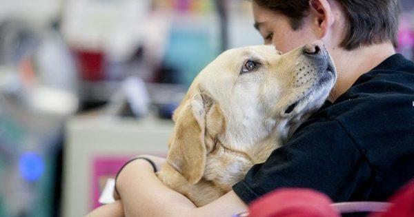 Δείτε πως υποδέχεται αυτός ο σκύλος τον κηδεμόνα του! (βίντεο)