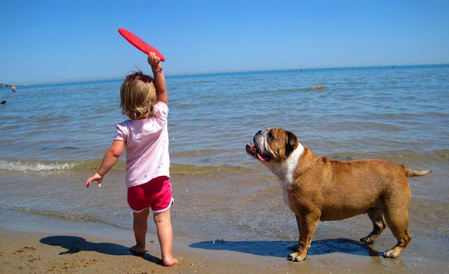 Σκύλος Παραλίες για σκύλους παραλία
