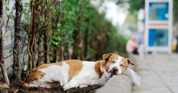 Πρόστιμο 60.000 ευρώ σε άντρα που δηλητηρίαζε σκύλους