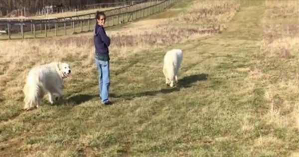 Βγήκε βόλτα με τα δύο σκυλιά της, αλλά δεν περίμενε να τους συντροφεύσει… ΑΥΤΟ!