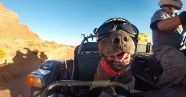 Ένας σκύλος που λατρεύει την περιπέτεια (βίντεο)