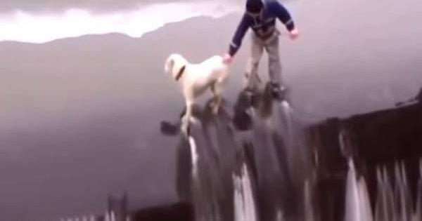 Διασώσεις ζώων που κόβουν την ανάσα (βίντεο)!
