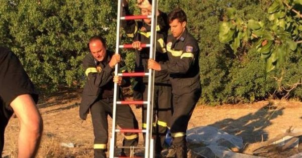 Πυροσβέστες έσωσαν το γατάκι που έπεσε σε πηγάδι στο Νέο Ψυχικό Αττικής